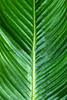 CR Leaf A_004