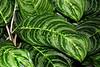 CR Leaf B_001