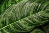 CR Leaf B_002