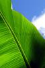 Sky Leaf CR_006