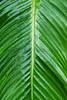 CR Leaf A_003