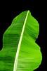 CR Leaf D_007