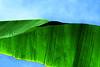 Sky Leaf CR_002