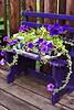 Petunia bench AMck_005