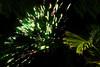 wylie fireworks_046