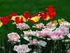 HL03flowers_048