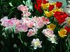 HL03flowers_044