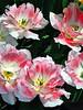 HL03flowers_052