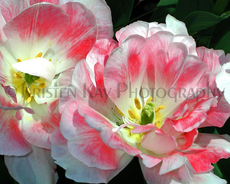 HL03flowers_051