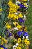 dafoldill garden 3-12_003