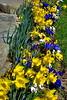 dafoldill garden 3-12_002