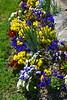 dafoldill garden 3-12_005