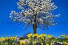 daffoldil tree 3-12_002