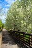 WoodBridge Spring 2013_011