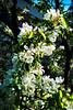 hw flower tree z_005