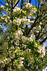 hw flower tree z_001