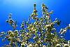 Pear tree wide_003