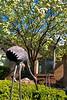 hw spring tree flamingos_002
