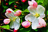 Pink FlowerTrees Z 2013_004 11x14d