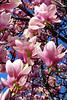 pinkTree2012_003z