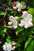 Pink FlowerTrees Z 2013_004