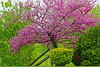 plumTrees RRTieFence_003d