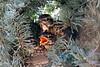 birds in nest_015m