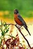 bird worm sx50