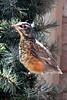 baby bird flies_002