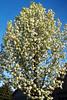 5-13 Flower Trees_001