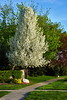 Wt Flowertree2013hw_009