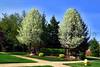 hw entry trees_F