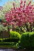 Spring Trees Gp2013_014