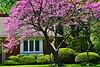 Spring Home GP12_001