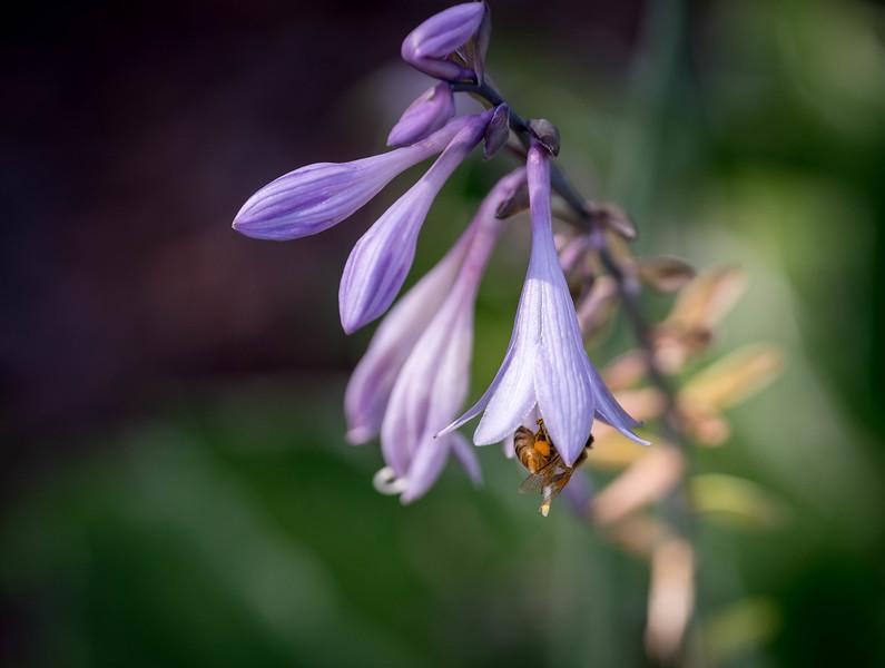 Bee Acrobatics