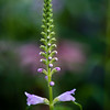 Flower Spire