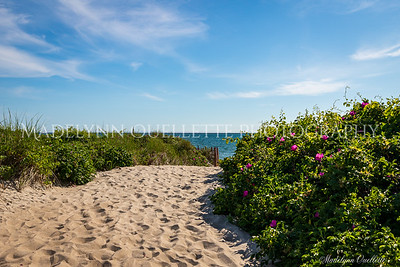 Beach Path among the Roses