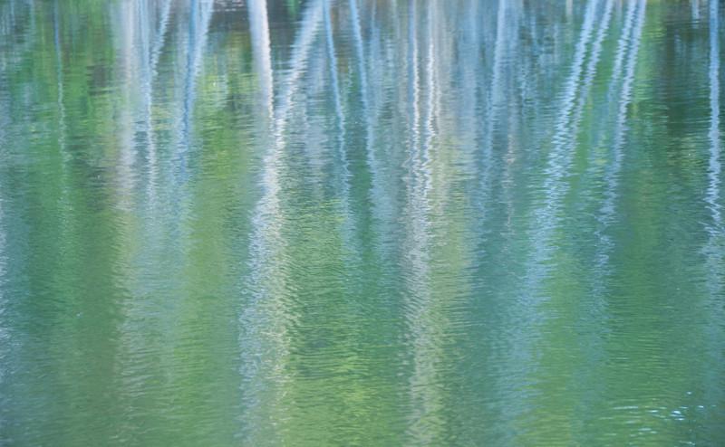 Summer aspen reflections