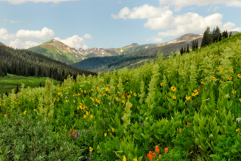 Near Crested Butte, Colorado
