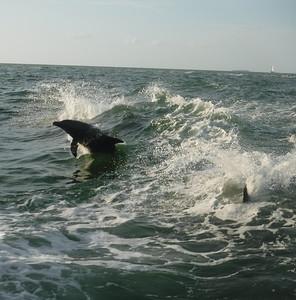 Sea Screamer - Dolphin Watch - Session I