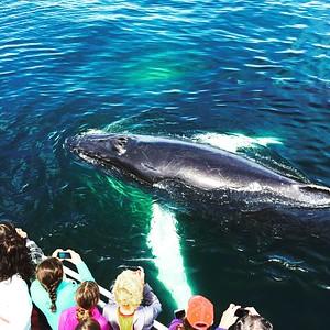 Cape Cod Marine Life Adventure