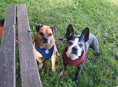 Buster brown and Poppy