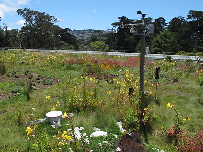 Green roof of the California Academy of Sciences building.