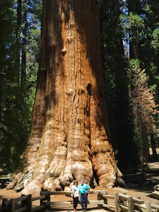 People on front of General Sherman tree.