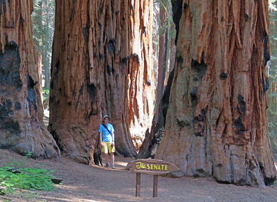 At the Senate Group of giant sequoias.