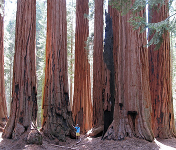I believe this group of sequoias is called the House. I'm not sure though. In any case - big trees.