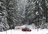 The gate on the Paradise Road at Longmire. Due to heavy snowfall, the gate opened around 11 am on Wednesday and slightly earlier (around 10) on Thursday. As far as I know, they start plowing the road very early in the morning nearly every day and it takes them a few hours to clear it.<br /> <br /> Brama na drodze prowadzacej z Longmire do Paradise (Paradise jest znacznie wyzej od Longmire). Z powodu opadow sniegu, droge otwarto okolo 11 rano w srode i troche wczesniej (kolo 10) w czwartek. Z tego co wiem, odsniezanie drogi zaczyna sie bardzo wczesnie rano prawie kazdego dnia i zajmuje kilka godzin.