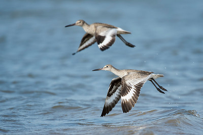 Willets Freeport TX