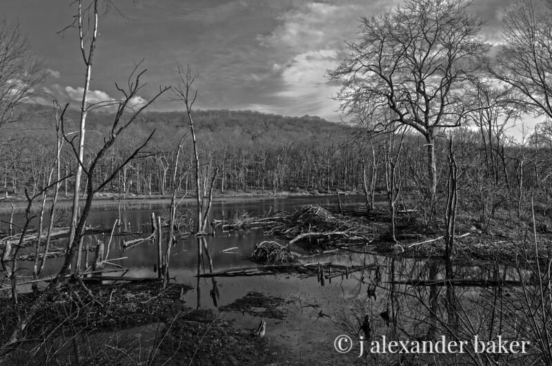 Beaver Lodge, Long Valley Pond, Sterling Forest, darker version