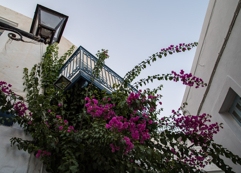 Bougainvillea and the Sky